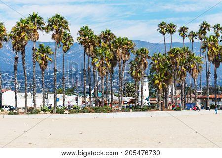 Palm trees in Santa Barbara seafront. California USA