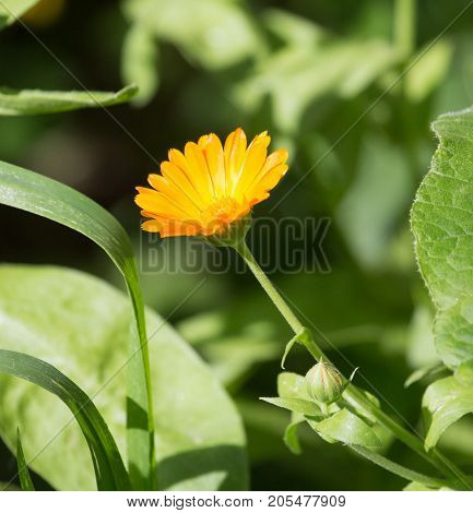 orange flower on nature . In the park in nature