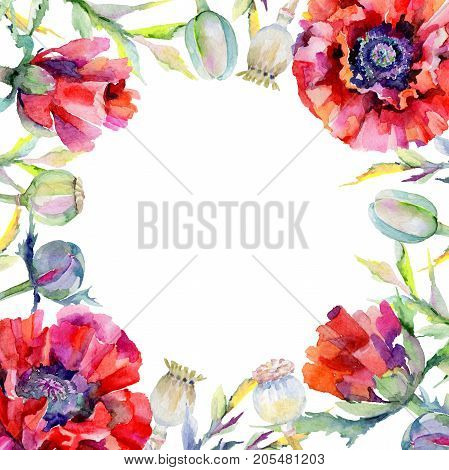 Wildflower poppy flower frame in a watercolor style. Full name of the plant: red poppy. Aquarelle wild flower for background, texture, wrapper pattern, frame or border.