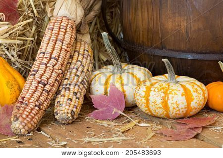 Colorful gourds and corn on a wooden surface