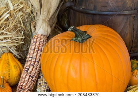 Colorful pumpkins gourds and corn with a straw background