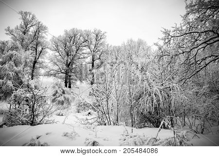 Branches of trees under snow textured winter forest background