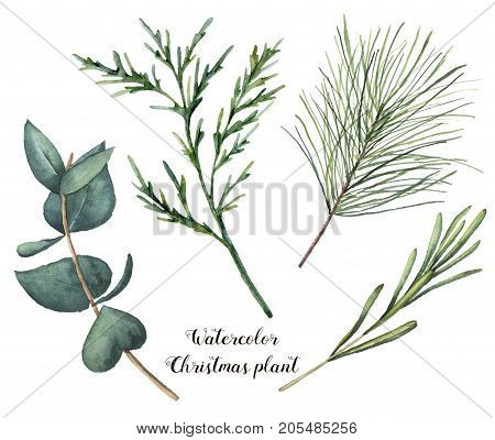 Watercolor Christmas plant. Hand painted rosemary, eucalyptus, cedar and fir branches isolated on white background. Floral botanical clip art for design or print. Holiday illustration.
