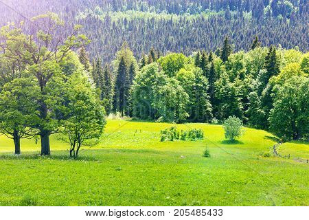 Scenic summer view of Carpathian Mountains landscape with green forests hills grassy meadows in Ukraine