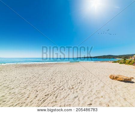 Birds flying over Le Bombarde beach Sardinia