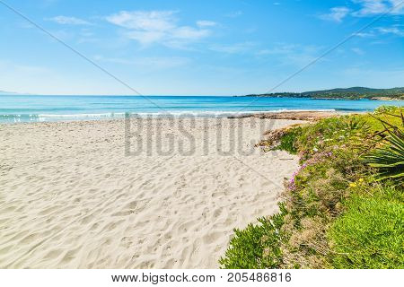 White sand and blue sea in Le Bombarde beach Sardinia