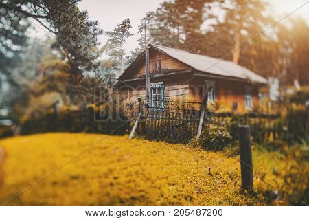 Autumn true tilt-shift scenery with small rustic wooden house located in Altai mountain district of Russia in sparse pine forest with big piny branch and yellow glade in foreground strong bokeh