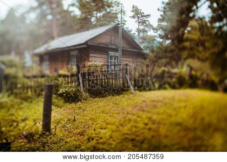 Autumn true tilt-shift landscape with old rural wooden residential house in Altai mountain district of Russia in sparse coniferous forest with meadow in foreground strong bokeh