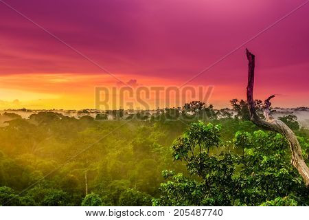 View on purple sunset over the brazilian rainforest in the Amazon region
