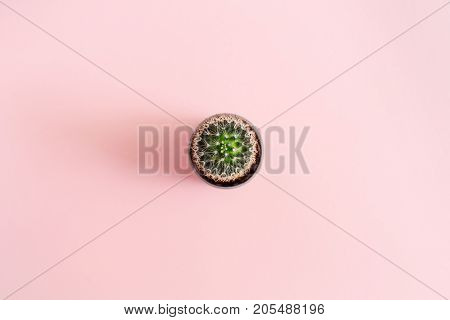 Cactus flower on pink background. Flat lay top view minimal concept.