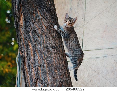 Brown funny young cat climbing tree and looking to camera,