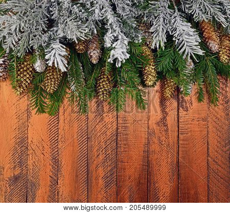 Golden cones and snow-covered branches of a Christmas tree on a bright wooden background. Decor with natural elements.