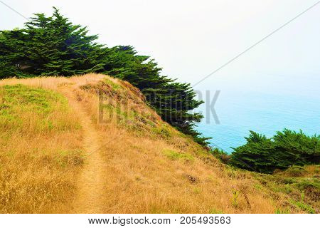 Hiking Trail thru a field beside Cypress Trees taken at the Marin Headlands Park in Marin County, CA