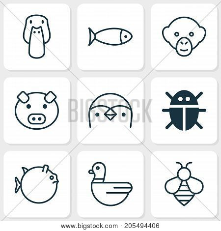 Zoology Icons Set. Collection Of Fish, Duck, Goose And Other Elements