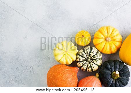 Above view of different varieties of pumpkins and gourds on the off white background, selective focus