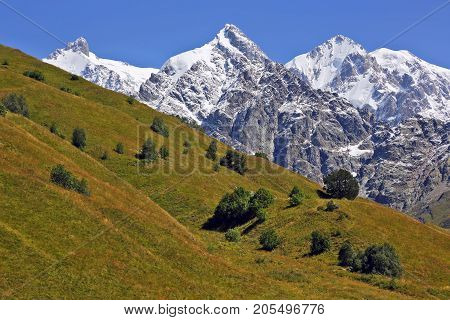 landscape of green grass and snowy mountains