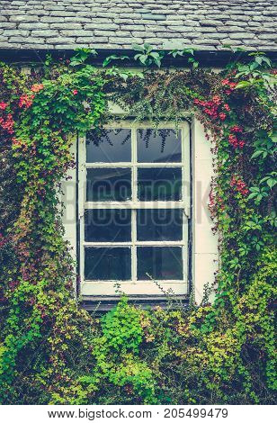 Detail Of A Window On An Old Cottage In England With A Lovely Floral Border