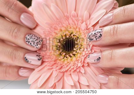 Elegant female hands holding gerbera. Beautiful womans hands with fresh manicure holding flower. Female treatment and beauty.