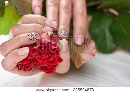 Red rose in womans manicured hands. Female hands with beautiful gentle manicure holding flowers. Professional skin and nails care.