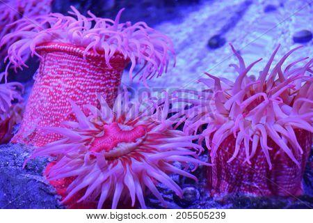 Beautiful Colorful Sea Urchin in an Aquarium