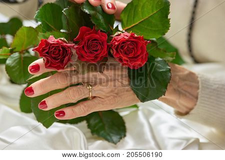 Red roses in beautiful female hands. Senior woman hands covered with red polish holding bouquet of red roses.