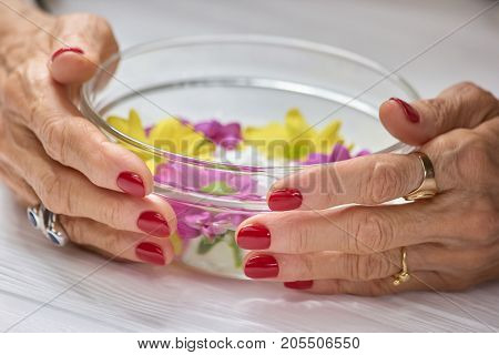 Female hands holding bowl with water. Woman aged hands with beautiful red manicure holding glass bowl with flowers. Hands care and spa.