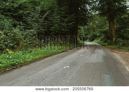 Empty Country Asphalt Road Passing Through The Green Forest In The Region Of Normandy, France. Natur