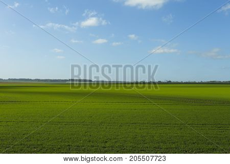 Green Wheat Field On A Sunny Day. Countryside Landscape, Agricultural Fields, Meadows And Farmlands