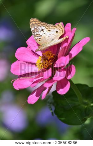 A Beautiful Colorful Butterfly In A Garden