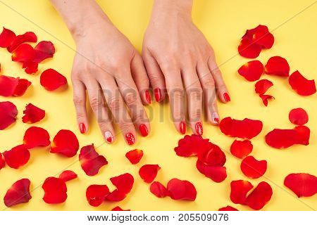 Female manicured hands surrounded with petals. Woman hands with beautiful red manicure and rose petals on yellow background.