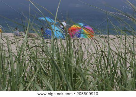 Umbrellas through the grass on a New England beach