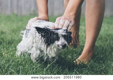 a dog getting a bath outside by owner.