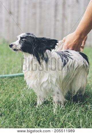a dog getting a bath outside .
