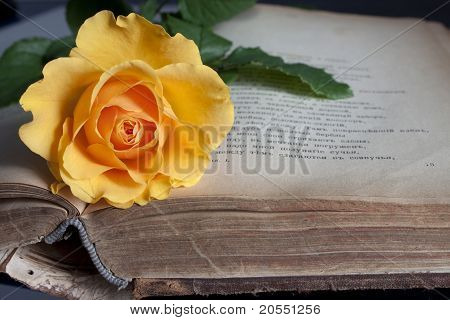 Old Book And Fresh Rose