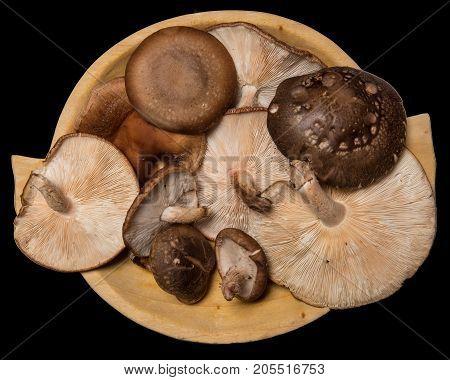 Shiitake mushrooms on cutting wood board background.