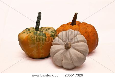Three small pumpkins, a white one, a multi colored and an orange one