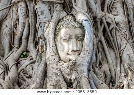 One of the most popular Thai Buddha heads in the world is Buddha Head in Tree Roots, Wat Mahathat, Ayutthaya.