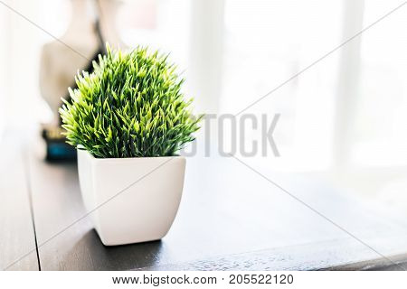 Closeup Of Green Plant In Small White Ceramic Flowerpot On Table In Minimalist Staged Model House In
