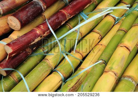 Sugarcane Texture As Nice Natural Background