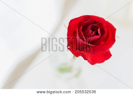 Red roses in a vase on a white tableRed roses in a vase on a white table