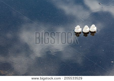 Ducks in a row in a puddle with reflections of blue sky and white clouds after a rainstorm
