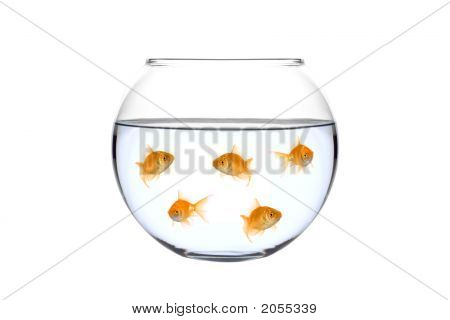 Many golden fish in a bowl against white background poster