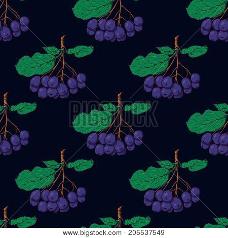 Hand drawn seamless pattern with hanging bunches of chokeberry, sketch style vector illustration on blackbackground. Chokeberry seamless pattern, backdrop, textile design