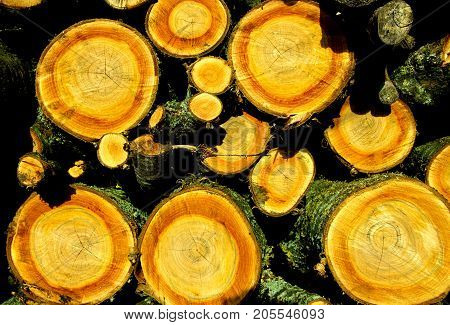 Colorful woodpile with orange and red colors and round wood.