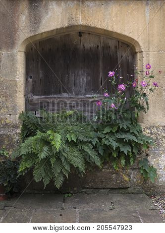 Cotswold stone planter with ferns and anemone Gloucestershire England.