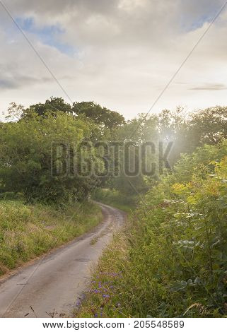 A Cotswold lane at sunset with Oak and Ash trees Gloucesterhire England.