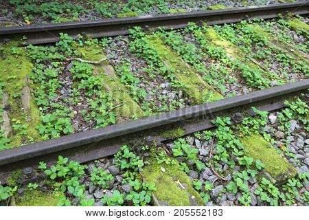 Rails Of An Abandoned Track For Trains In The Forest