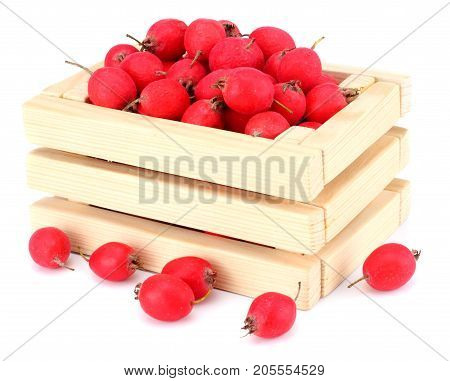 Hawthorn Berry In Wooden Box Isolated On White Background