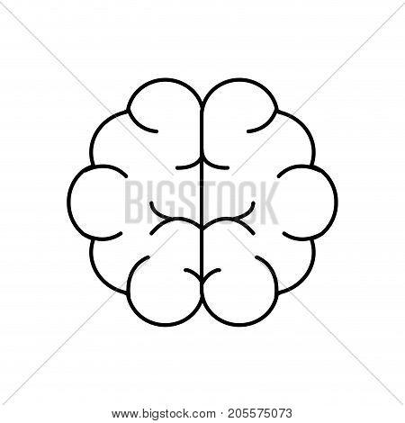 line brain human anatomy organ of inteligence vector illustration