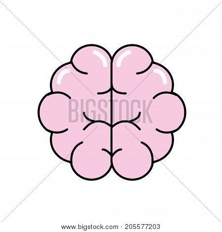 brain human anatomy organ of inteligence vector illustration